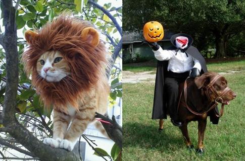disfraz para gato de león