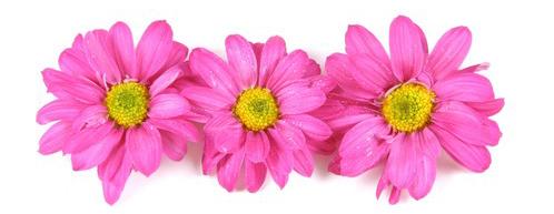 Fleurs de printemps pour MayDay aux Etats-Unis