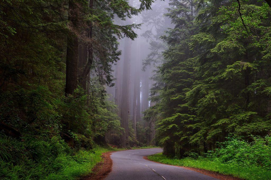 Road Trip sur la côte ouest des USA : à la découverte des parcs nationaux